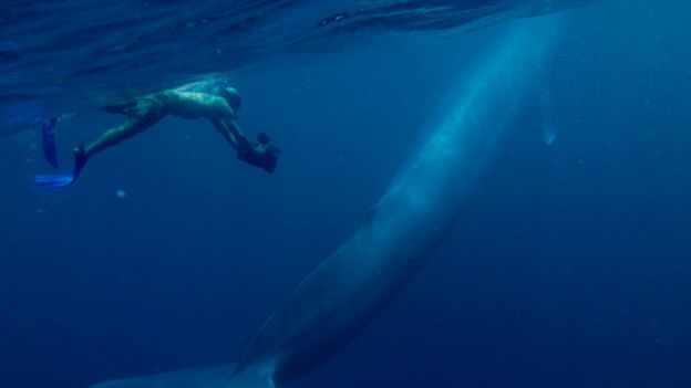 blue-whales-615