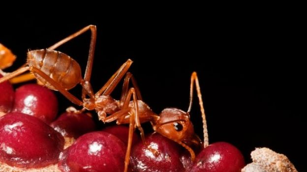 06_carb_source_red_bugs_20b0a13972