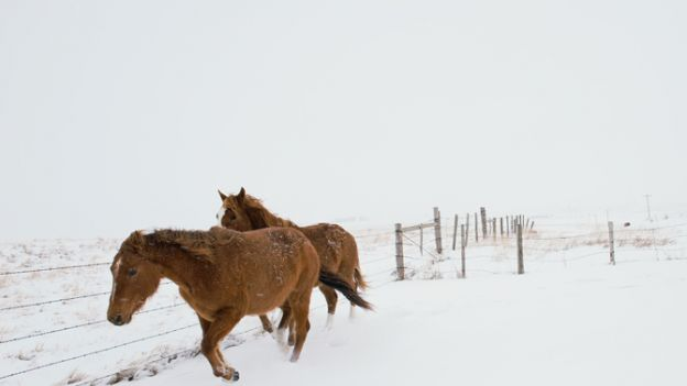 Montana: Przetrwać następny sezon
