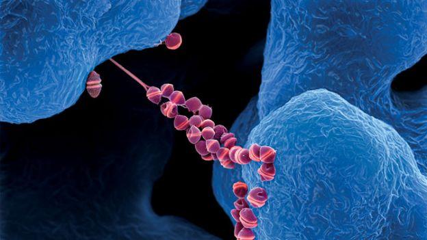 Mikroby: Mały, mały świat