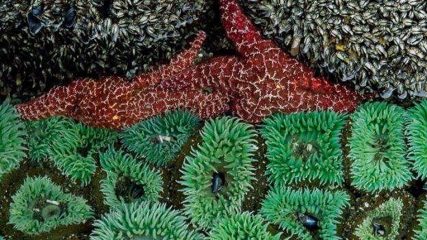 20_gooseneck_barnacles_sea_anemones_714