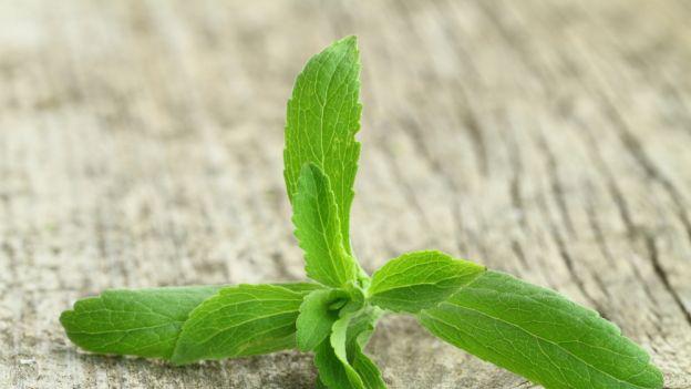 Pochodzące z Ameryki Południowej zioło robi furorę wśród fanatyków zdrowego odżywiania i... słodyczy.