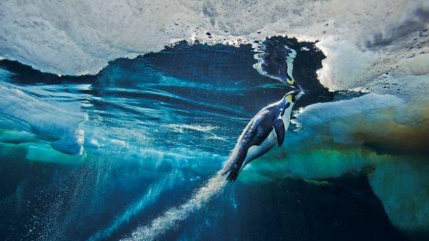 pingwiny: Prędkość ucieczki
