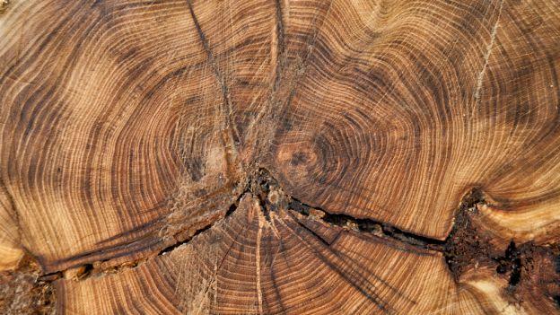 Problem głodu na świecie? Jedzmy drewno!