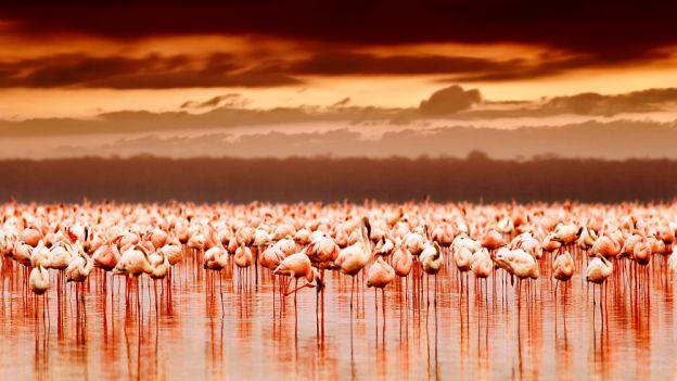 flamingi_01