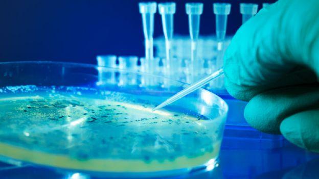 Bakteryjny test światła