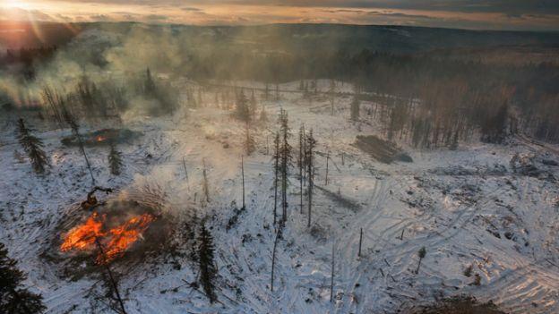 pine06-alberta-burning-infested-trees-670