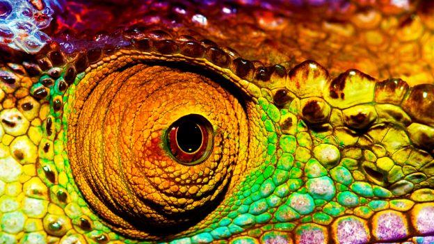 Kameleon - wiemy jak zmienia kolor