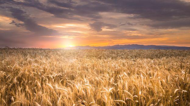 Świat bez GMO