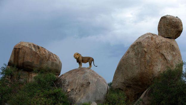Król na skale