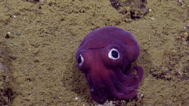 Kiedy zobaczyli to zwierzę nie mogli powstrzymać się od śmiechu. Ciekawe czy tobie się uda [FILM]