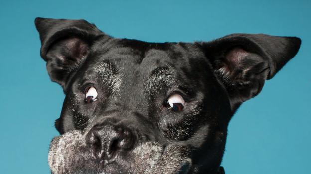To najbardziej ekspresyjne portrety, jakie kiedykolwiek widzieliście. Psie portrety...