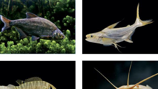 Ryby dające do myślenia