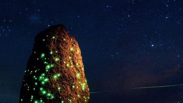 Bioluminescencja