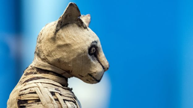 Kocia mumia