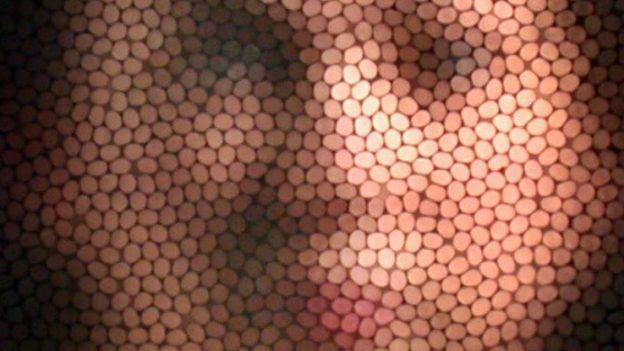 Jak widzą pszczoły i osy? Oto zdjęcie symulujące wizję ludzkiej twarzy