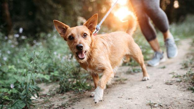 Właściciele psów cieszą się większym powodzeniem i częściej randkują. To potwierdzone