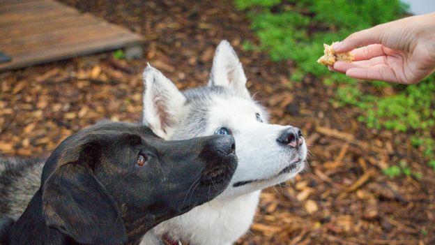 Zmiany klimatu: czy jeśli psy zaczną jeść robaki uda się coś zmienić?