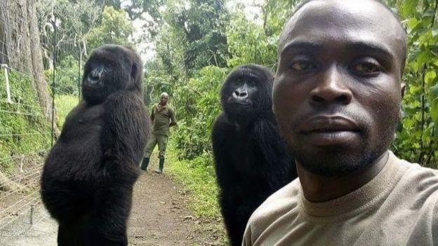 Selfie z gorylami