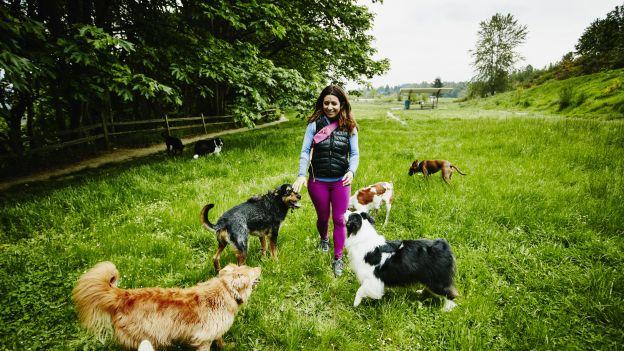 Nie od dziś wiadomo, że posiadanie psa jest dobre dla zdrowia. Właśnie pojawiły się kolejne argumenty: psy mają mają związek z tym, jak bardzo jesteśmy aktywni fizycznie.