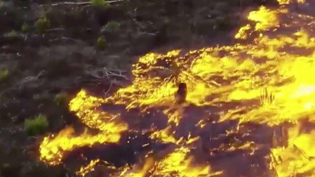 Płonie Amazonia