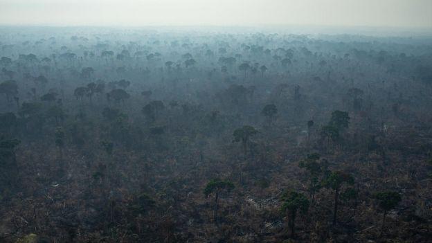 Tak wyglądają płonące lasy deszczowe Amazonii. Zdjęcia Greenpeace
