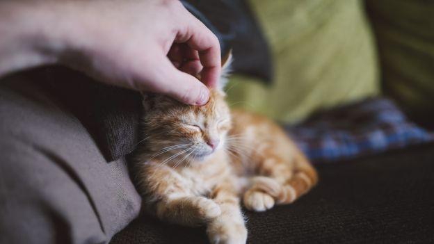 Koty nie mają lekkiego PR'u: owszem słodkie i śliczne, ale postrzegane często jako wredne i traktujące człowieka jako maszynkę do uzupełniania miski. Tymczasem nowe badania przeczą temu stereotypowi. Wygląda na to, że koty potrafią nas pokochać.