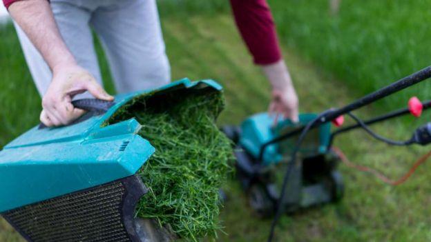 """Lubisz zapach świeżo skoszonej trawy? To chemiczny """"krzyk"""" rozpaczy konających roślin"""