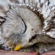 Musicie zobaczyć te śpiące zwierzęta. Są naprawdę urocze! GALERIA
