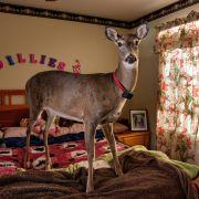 09-dillie-the-deer-670