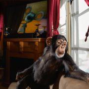 14-chance-hollywood-chimp-670