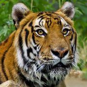 Pozdrowienia ze... Świątyni Tygrysów!