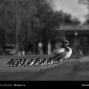 Konkurs na Fotografa Roku 2016 Okręgu Mazowieckiego ZPFP