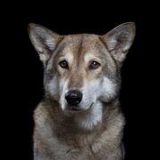 Fotograf na swoich zdjęciach odkrywa prawdziwą osobowość zwierząt