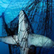 Strach przed rekinami w USA