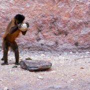 Małpie narzędzia