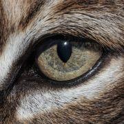 Co widzą zwierzęta?