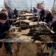 Zwierzęta na fermach futrzarskich w Chinach mają lepiej? Według obrońców ich praw to kłamstwo. A rynek się rozrasta