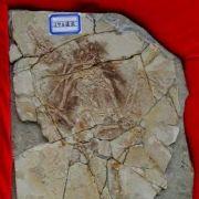 10. Skamielina archeoraptora