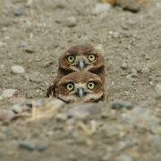 Kto tam?