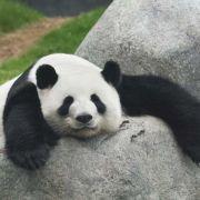 Pandy – Chiny