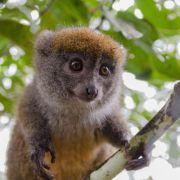 Lemury – Madagaskar