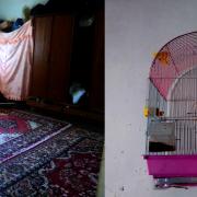 Ptaki w klatce - Mohamad