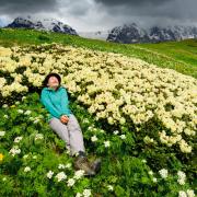 Kwitnące rododendrony  – popularny obrazek  w górach Kaukazu.