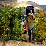 Autem przez winnice Portugalii