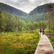 Szlak na Preikestolen jest bardzo malowniczy: góry, sosnowe  lasy, jeziorka  i przepaście.