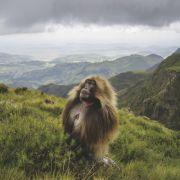 Świat pięknych małp