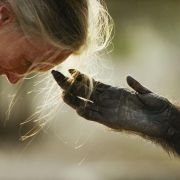 Jane Goodal i Jou Jou,