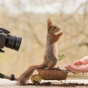 Fotograf przez 4 lata robił zdjęcia dzikim wiewiórkom. W końcu przyszedł czas na rewanż.