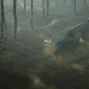"""""""Ewolucja w kilku odsłonach"""" w styczniu na kanale National Geographic"""